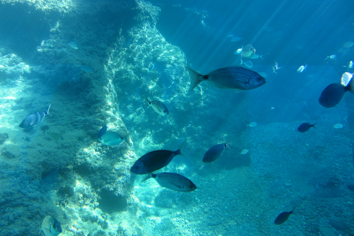 underwater world of Benidorm
