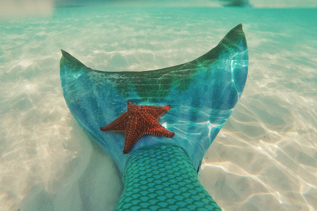 Mermaid tail view underwater