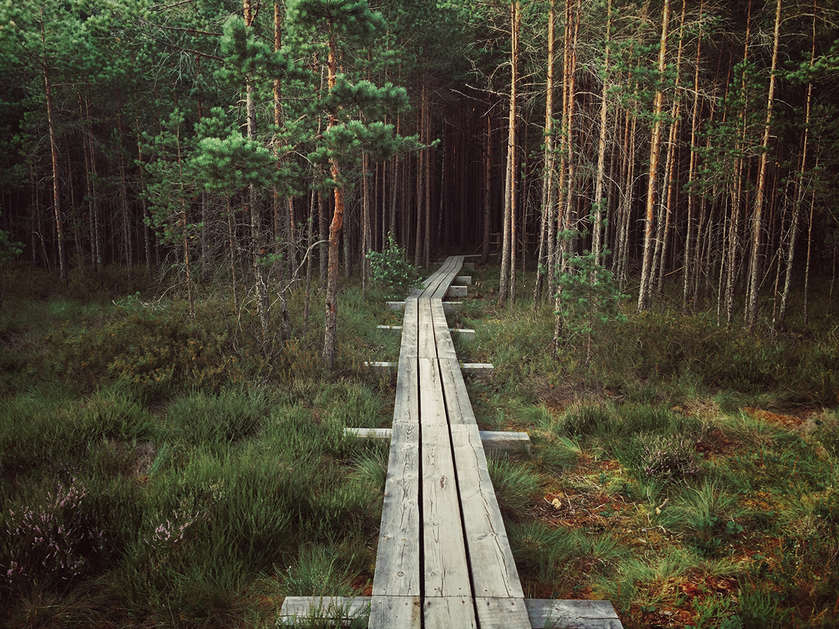 Wooden path in the forest