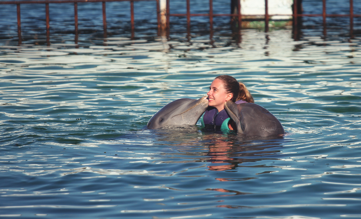 Exciting swimming with dolphins in Cuba