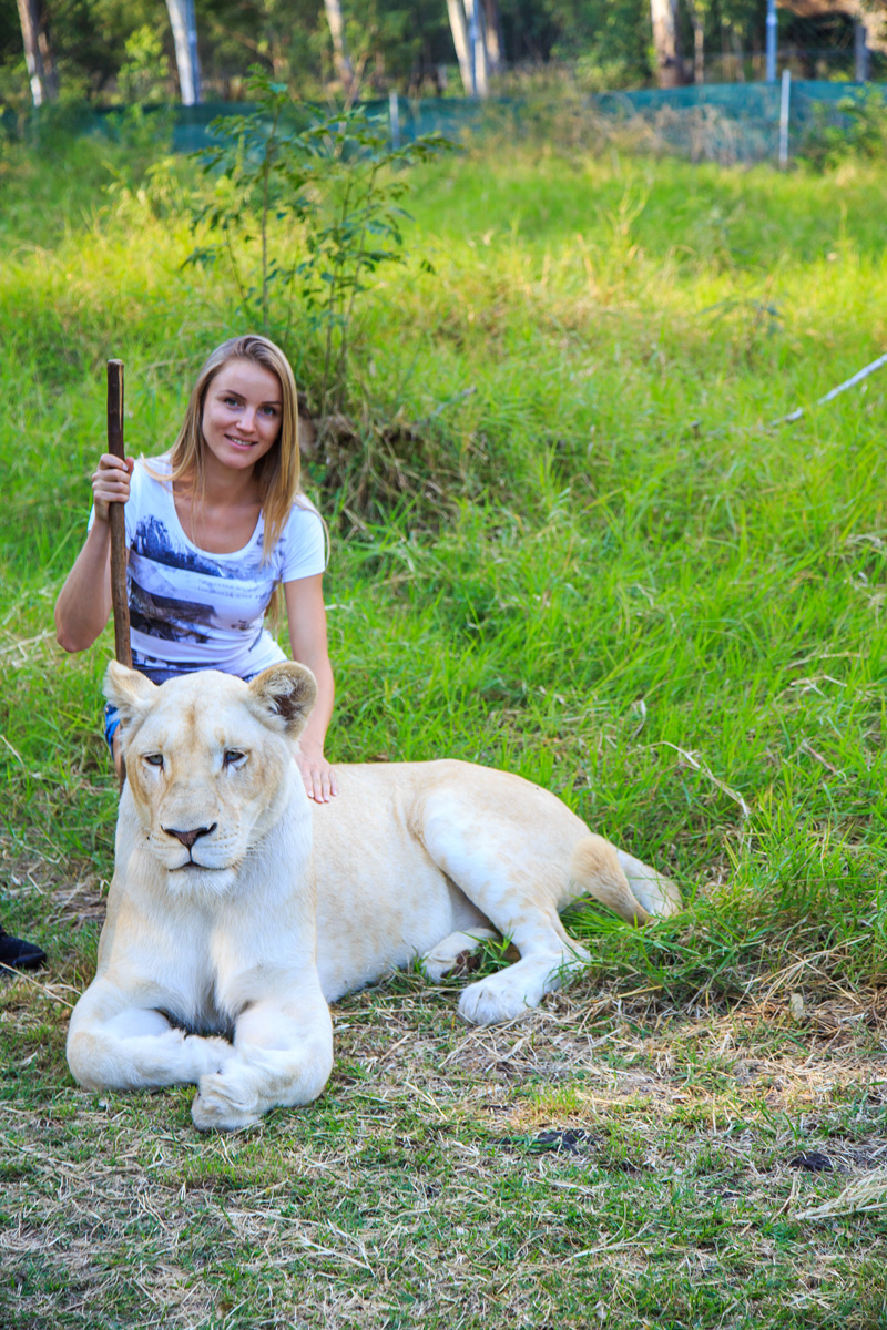 Walk with lions on Mauritius