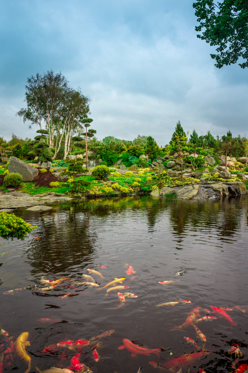 Beautiful pond in Stavanger gardens