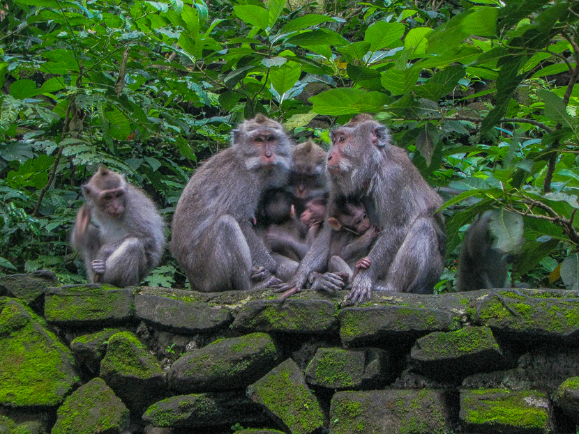 Find monkeys in Bali