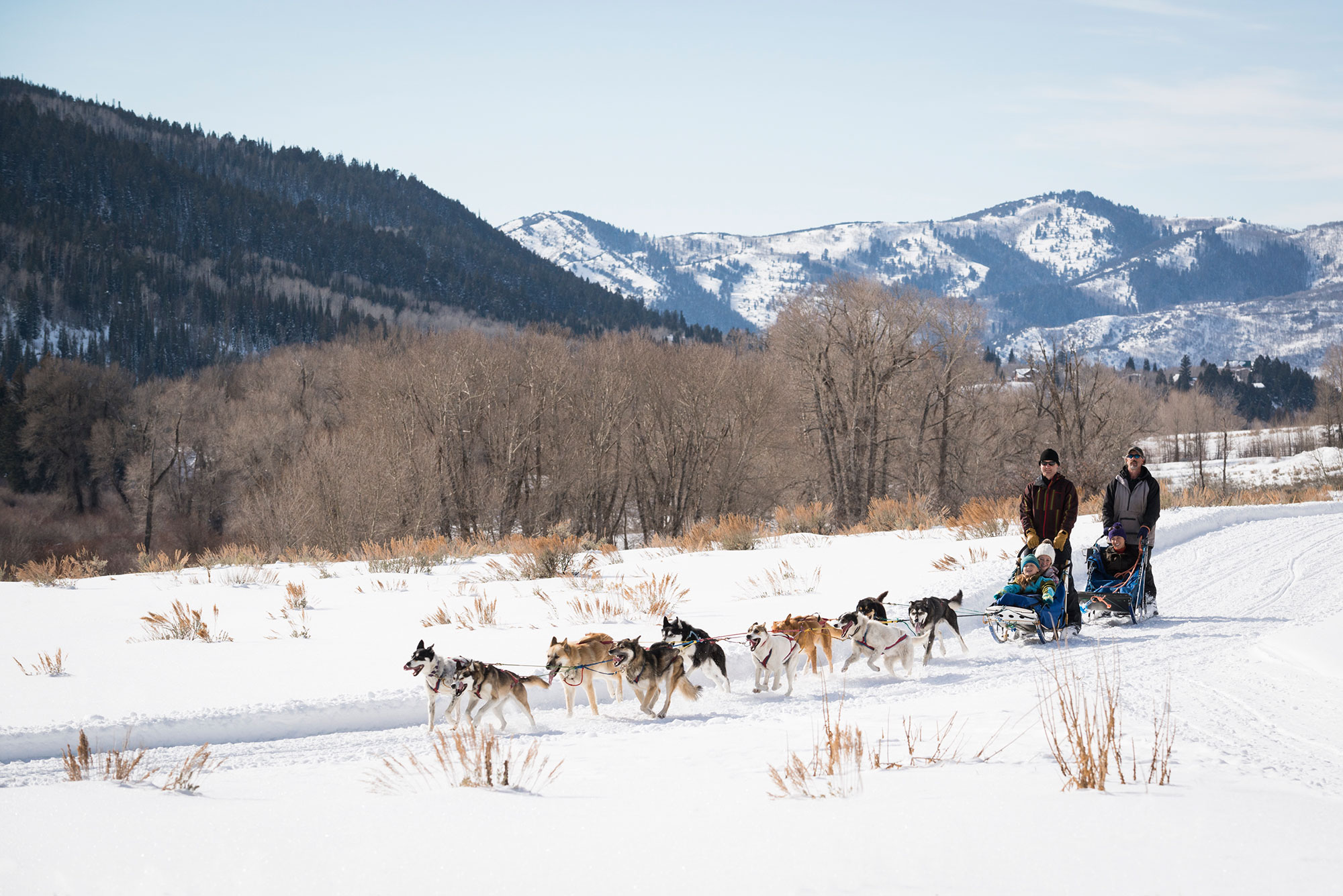 Dog sledding in Park City