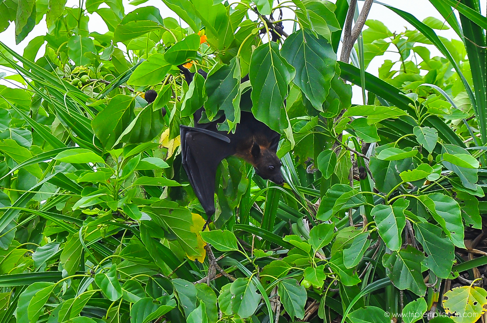 Maldives Shangri-La flying fox