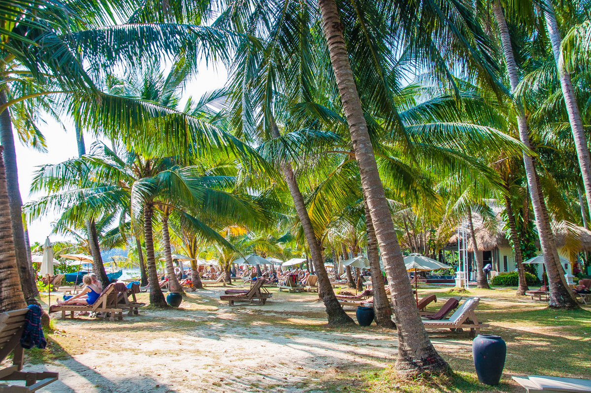 The coconut plantation and mango grooves in Phuket