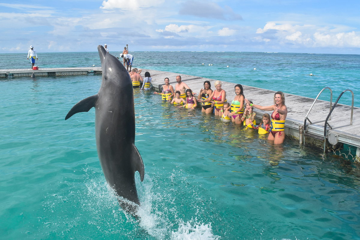 Dolphins greetings