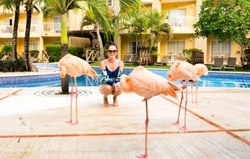 Dreams Punta Cana: Oasis-like Retreat with Beautiful Flamingos